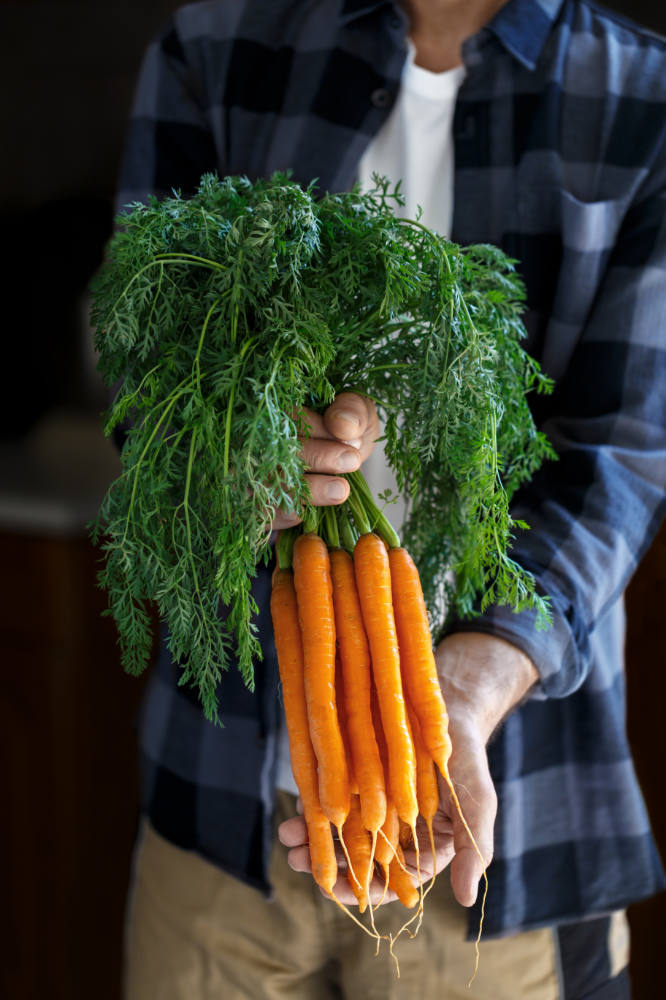 Gardener holding a bunch of freshly harvested carrots close up vertical