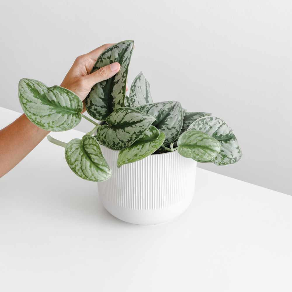 womens-hand-touch-the-leaf-of-the-houseplant-on-wh-7YJFVZ7