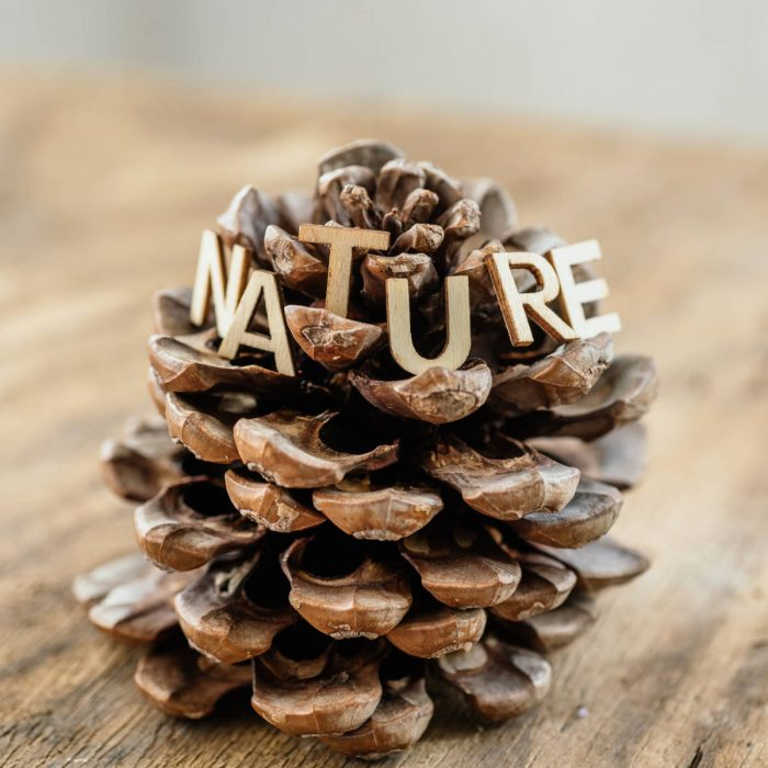 Nature sign on pine cone. Wooden background.